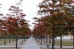 Herbstimpressionen aus Rostock