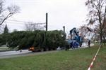 Weihnachtsbaum vor dem Kröpeliner Tor