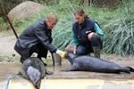 OstseeSparkasse und Rostocker Zoo – seit 16 Jahren treu
