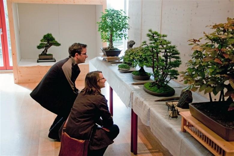 7 rostocker bonsaitage 2010 rostock heute. Black Bedroom Furniture Sets. Home Design Ideas