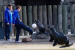 FC Hansa Rostock gegen Seebären im Zoo Rostock