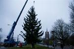 Zwei grüne Riesen für den Rostocker Weihnachtsmarkt