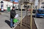 """Baumbepflanzung """"Am Markt"""" in Warnemünde übergeben"""