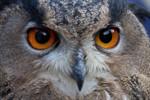 Zooerlebnis im Winterwald 2011