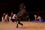 S. Perla in der Royal Horse Gala