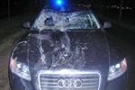 Verkehrsunfall zwischen Pkw und Pferd