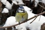 Vogelinventur: Stunde der Wintervögel 2012