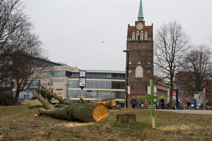 RGS lässt 14 Bäume vor dem Kröpeliner Tor fällen