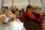 Ostseemesse 2012 wird schwedisch