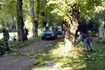 Verschönerungs-Verein: Arbeitseinsatz im Lindenpark