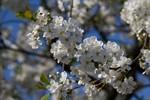 Asiatisches Frühlingsfest und Kirschblütenfest 2012