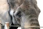 Happy Birthday, Sara! Elefantendame wird 50