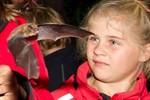Europäische Fledermausnacht für Kinder am Schwaanenteich