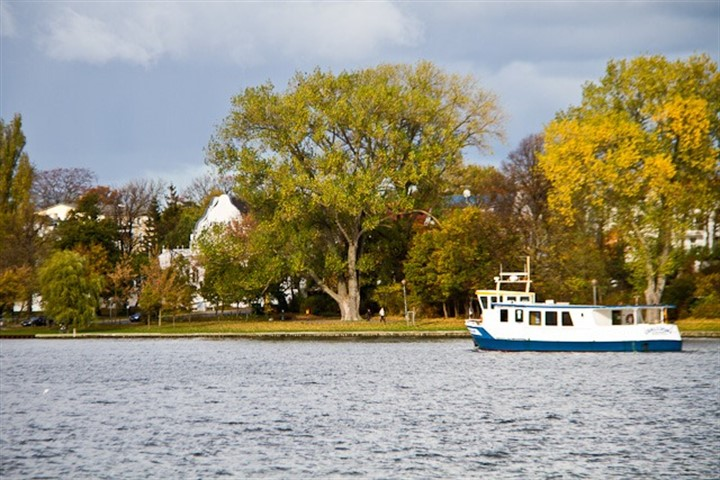 Baumnaturdenkmal am Gehlsdorfer Ufer soll gefällt werden