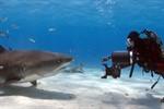 National Geographic Fotograf David Hettich: Abenteuer Ozean