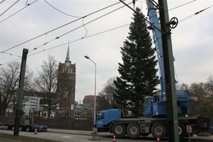 Höchster Weihnachtsbaum des Landes aufgestellt
