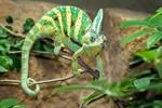 Die Wildtier-WG im Darwineum wächst