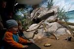 Erstmals nach der Wende über 600.000 Besucher im Zoo