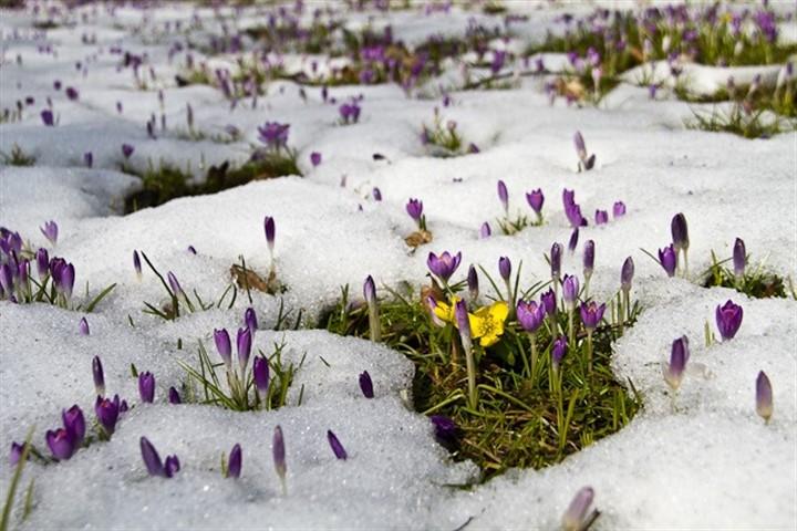 Jetzt aber: Frühling, Blumen los!