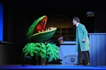 Der Kleine Horrorladen - Musical im Volkstheater Rostock