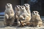Tierische Partymeile im Zoo Rostock