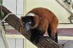 """Neue Tierart im Zoo Rostock: """"Waldgeister"""" im alten Menschenaffenhaus"""