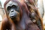 Ein Jahr Darwineum – Zoo zieht positive Bilanz