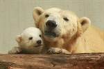 """Schwerer Abschied von Eisbär """"Old Churchill"""" im Zoo Rostock"""
