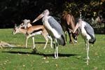 Zoo Rostock: Marabus sind in die Afrika-WG eingezogen