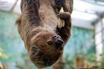 Die Tierwelt als emotionale Brücke zum Leben