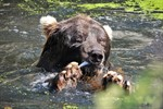 Trauer im Rostocker Zoo: Braunbär Bodo ist tot