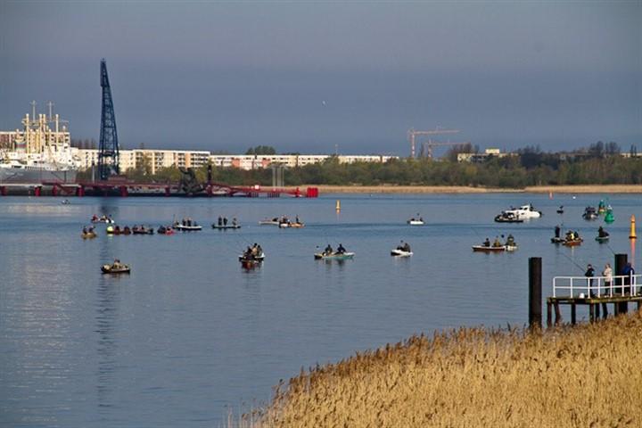 Heringssaison in Rostock: Angler bevölkern die Warnow