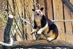 Altes Menschenaffenhaus wird Kletterparcour für Baumkängurus