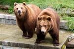 Wanja und Misho toben auf der Rostocker Bärenanlage