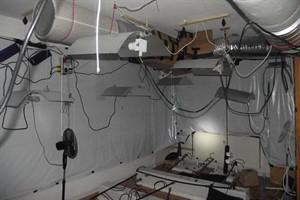wohnung in evershagen als hanf plantage genutzt rostock heute. Black Bedroom Furniture Sets. Home Design Ideas