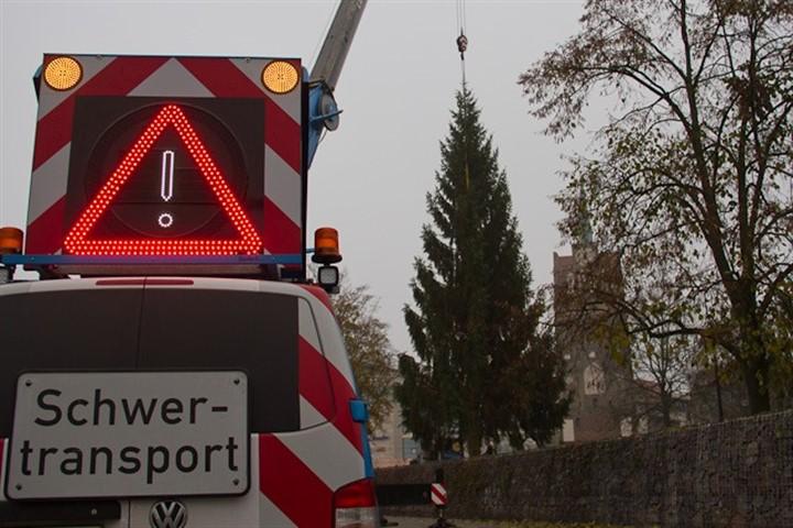 Riesige Tanne für den Rostocker Weihnachtsmarkt aufgestellt