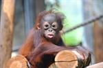 Zoo Rostock: Tickets zum halben Preis