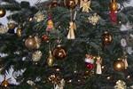 Weihnachtsbaumverkauf in der Rostocker Heide