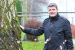 Wiro lässt kranke Bäume in Reutershagen fällen