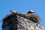 Vogelgrippe im Zoo Rostock