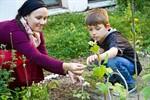 Gurkenernte im Vorgarten