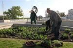 23.081 Sommerblumen für Rostock und Warnemünde