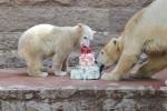 Halbjahresgeburtstag - Eistorte für Rostocks kleinen Eisbären Fiete