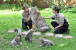 Geparden-Nachwuchs im Zoo Rostock getauft