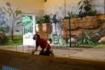Bald ziehen Zwergflusspferde in den Rostocker Zoo ein