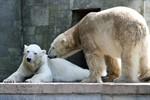 Zoo Rostock ist Spitze im europäischen Zoo-Ranking