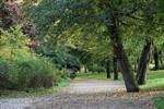 83 neue Bäume für Rostock