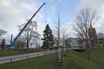 Tannenbaum für Rostocker Weihnachtsmarkt aufgestellt