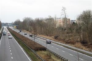 Durchforstung an der Stadtautobahn, Höhe Evershagen