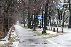 Ein schmaler Streifen des Küstenschutzwaldes müsste für einen regelkonformen Rad- und Fußweg in der Warnemünder Parkstraße geopfert werden